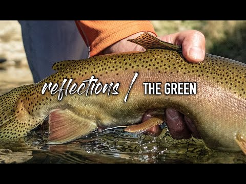 REFLECTIONS / THE GREEN: Fly Fishing The Green River Wyoming