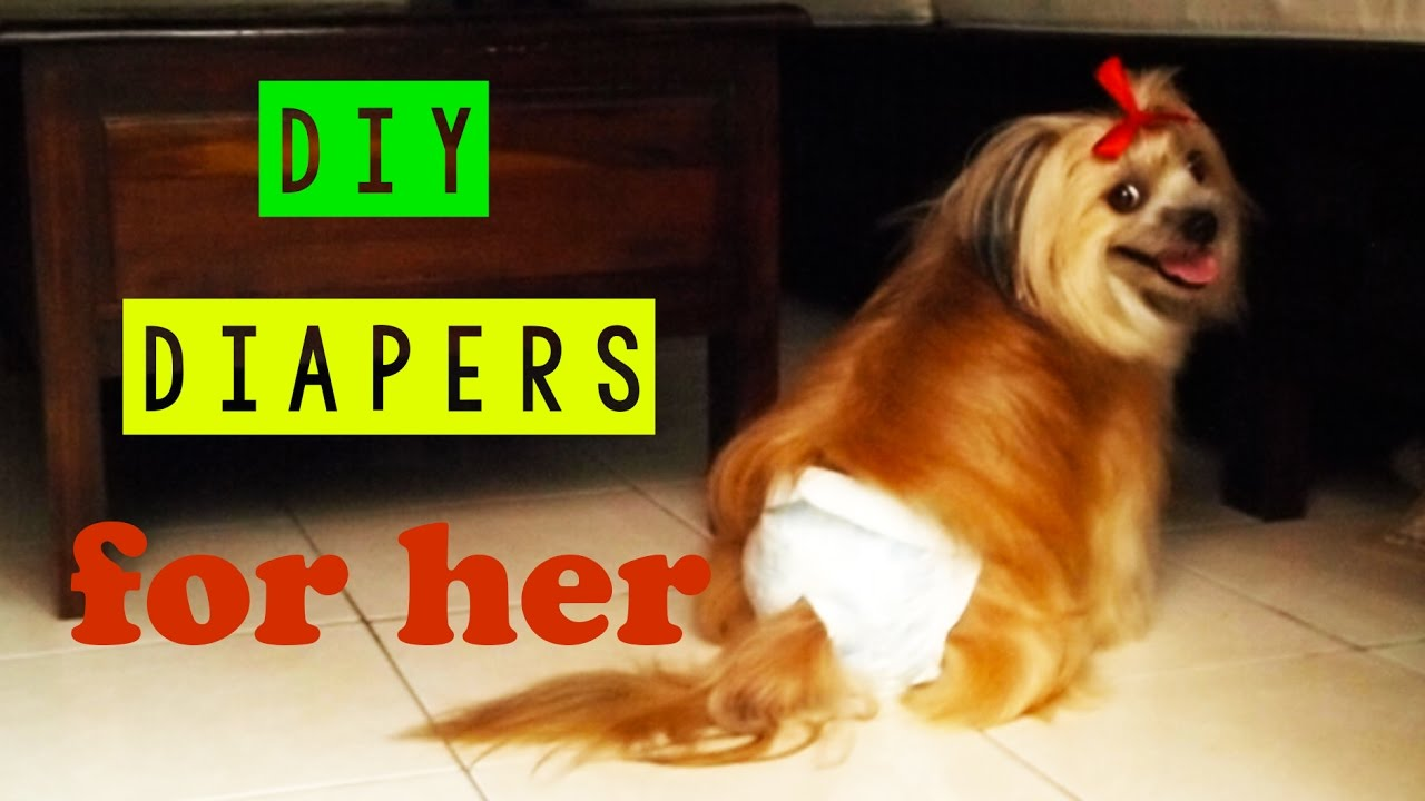 Dog On Her Period Care Dog Menstrual Diy Diapers Dog S Heat Cycle
