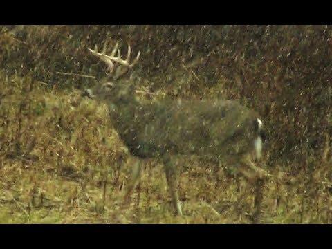 11 POINT BUCK DOWN!  Deer Hunting 2019 - Browning 25-06 - Pennsylvania Rifle Season - Boozer