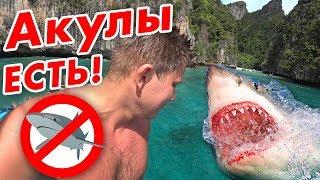 Акулы в Тайланде - здесь опасно?! 🦈 Острова Пхи Пхи и Ко Тао - встреча с акулой