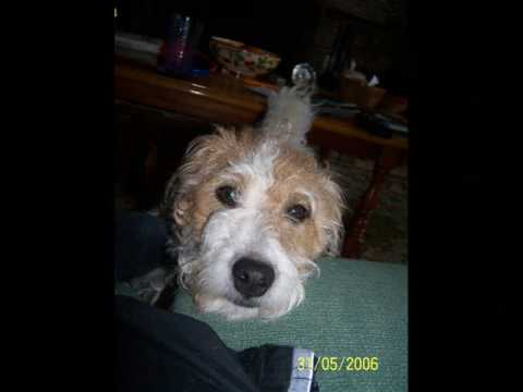 My stupid dog Ruby Dooby Doo