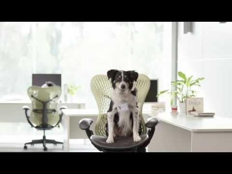 Can I use human shampoo on my dog?