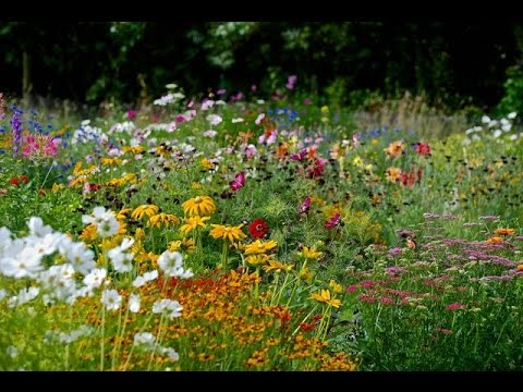 How To Sow A Mixed Annual Flowerbed