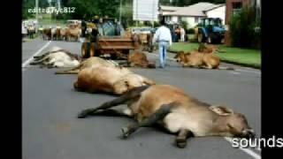 Myteriöses Massentiersterben weltweit / Mysterious Deaths Of Animals Around The World..? part 2