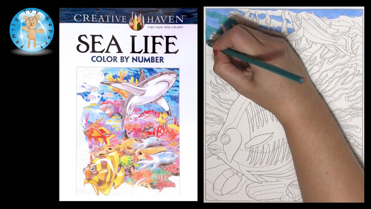 Creative Haven Sea Life Color By Number Adult Coloring Book Fish Reef Ocean