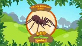 Leo The Wildlife Ranger Diaries - Goliath Birdeater Spider