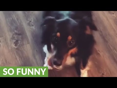 Hilarious breakdancing dog shows off her moves
