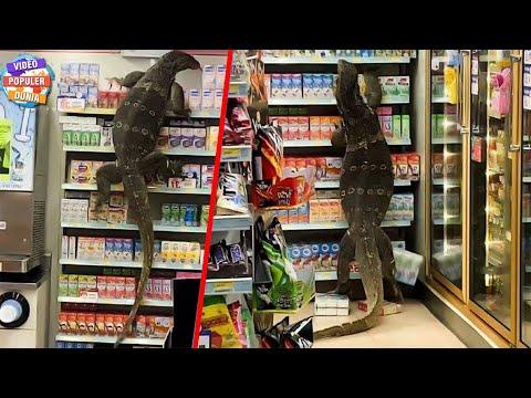 Video Viral Biawak Raksasa Masuk Supermarket Hebohkan Seluruh Pengunjung, Begini Kondisinya...