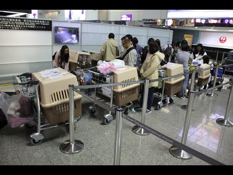 Shipping Rescue Dogs from Taiwan (Taipei Airport)