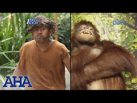 AHA!: Charles Darwin's Theory of Evolution