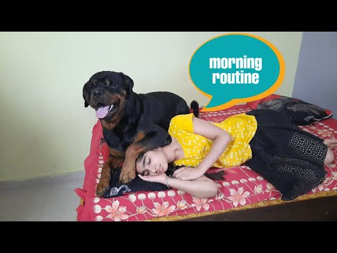 jerry and anshu morning routine ||well trained rottweiler || guard dog breed