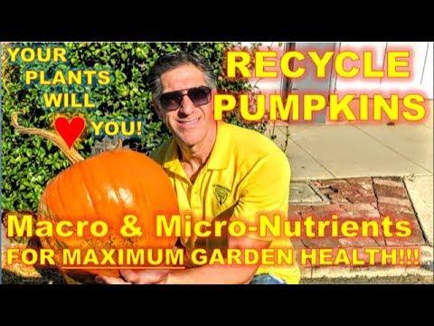 RECYCLE PUMPKINS |  Majority Of MACRO & MICRO-Nutrients Plants Need!!!