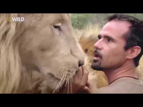nature documentary 2016 living with lion documentaries animal planet hd wild animals