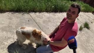 Собаке вернули жизнь и способность ходить
