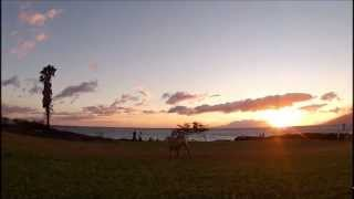 Dog Catches Frisbee At Sunset In Hawaii - Slow Motion 120fps Gopro Hero 2