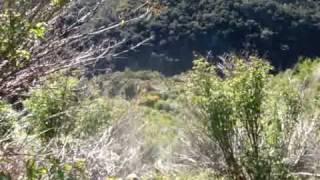Otago Boar Hunting