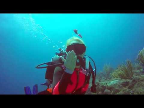 st-martin-sharks-4k-2019