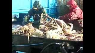 Лов краба в Беринговом море