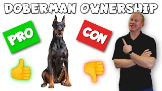 Doberman Pinscher Pros and Cons  From an ACTUAL Owner