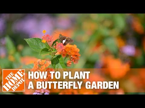 How To Build A Butterfly Garden The Home Depot Youtube