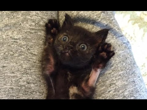Winnie the Kitten Getting Belly Tickles! (from Tenth Life)