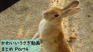 【かわいい】おもしろウサギ動画まとめ Part4【おもしろ】