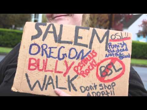 Salem Oregon Bully Walks Pit Bull Blues