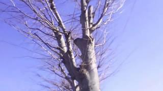 ウェザーニュースSOLiVE24専用の動画です。 栃木県佐野市にあります佐野...