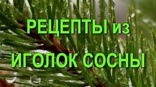 Хвоя сосны. Рецепты из сосновых иголок