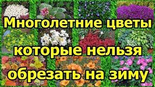 Многолетние цветы, которые НЕЛЬЗЯ обрезать на зиму.
