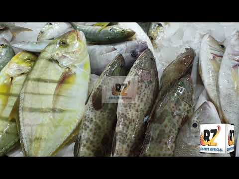 ALL TYPES OF FISH || AROUND THE WORLD