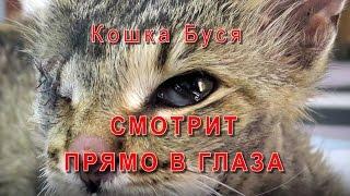Кошка Буся Смотрит прямо в глаза
