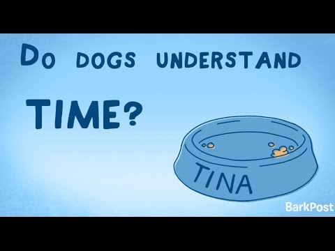 Inside A Dog's Brain: Do Dogs Understand Time?