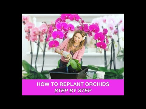 ORCHID CARE 🍃REPOTTING ORCHIDS /REPLANTING ORCHIDS 🌿 Shirley Bovshow