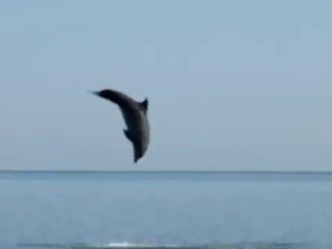 Вопрос: Опасна ли встреча с дельфинами при купании в море?