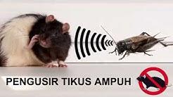 Pengusir Tikus Ampuh