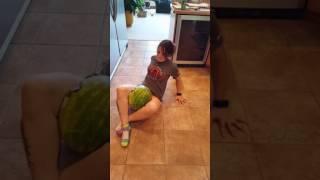 Watermelon attempt #1
