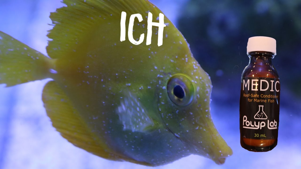 Reef safe ich treatment medic from polyplab youtube for How to treat ich in fish