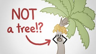 We don't know what a tree is (and this video won't tell you)