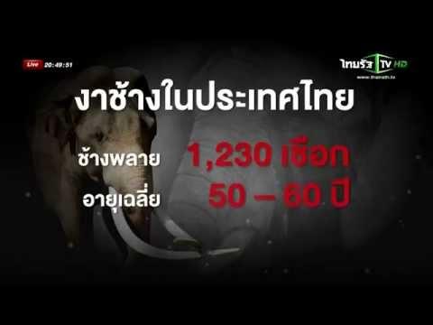 ข่าวไทยรัฐทีวี: สถานการณ์การค้างาช้าง