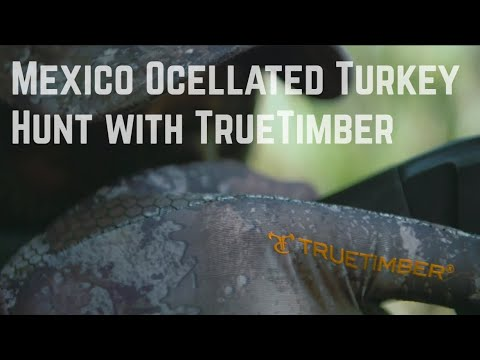 Mexico Ocellated Turkey Hunt With Rob Keck And TrueTimber