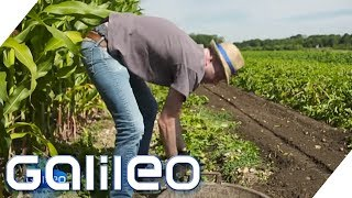 Der harte Alltag eines Bauerns | Galileo | ProSieben
