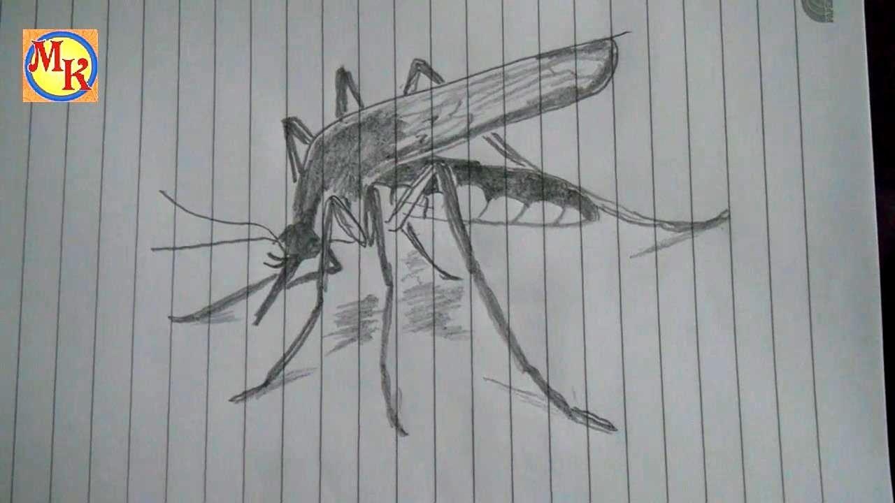 cara menggambar nyamuk