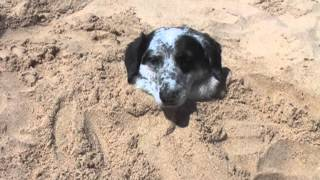 Dog buried in sand at the beach