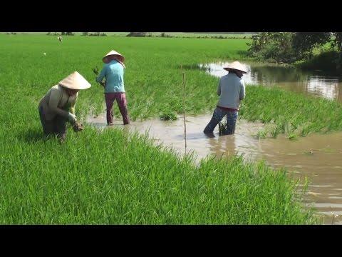 Vietnam Mekong Delta 8