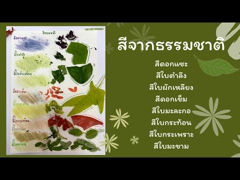 สีจากธรรมชาติ มาทดลองสีจากดอกไม้ ใบไม้กัน! ทดลองถูสีบนกระดาษ สีธรรมชาติ🍁☘️