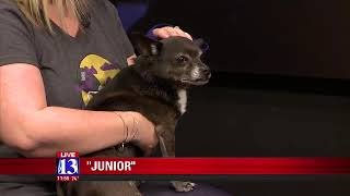 JUNIOR - Fox 13 Best Friend from the Humane Society of Utah