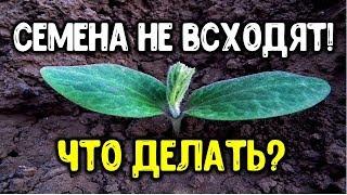 Семена не всходят? Что с ними не так? Что нужно знать о сроках хранения семян Практические подсказки