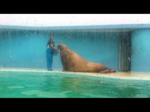 2 chú sư tử biển siêu cute (Viện hải dương học Otaru) - MOF Japanese Sweets & Cafe