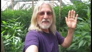 Gambar cover Grow Marijuana: Light Deprivation (Dep) Greenhouse